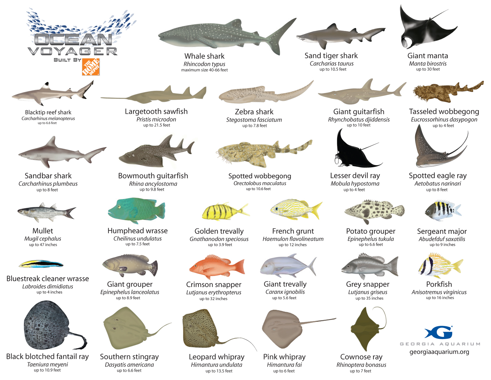 types of fishes and their names